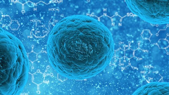 vieillissment des cellules inversés en laboratoire