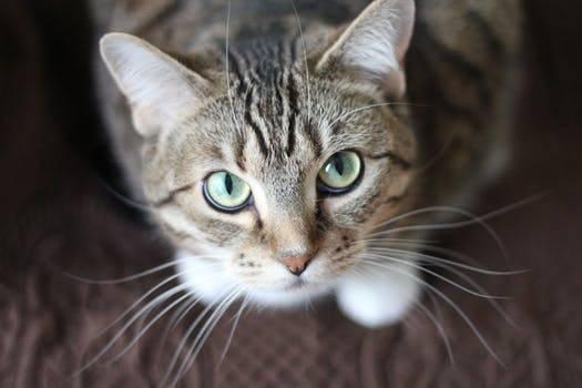 chat-retrouvé-dans-compartiment-voiture-newstrotteur