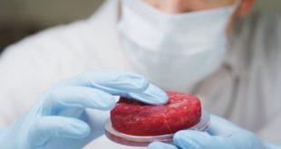 La viande «cultivée» pourrait créer plus de problèmes qu'elle n'en résout culturedmeat 310x165