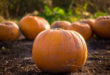 Le changement climatique menace d'éradiquer les légumes sauvages essentiels de l'humanité pumpkin patch wild main Uns 110x75